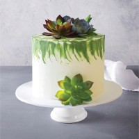 Sweet Succulent Celebration Cake